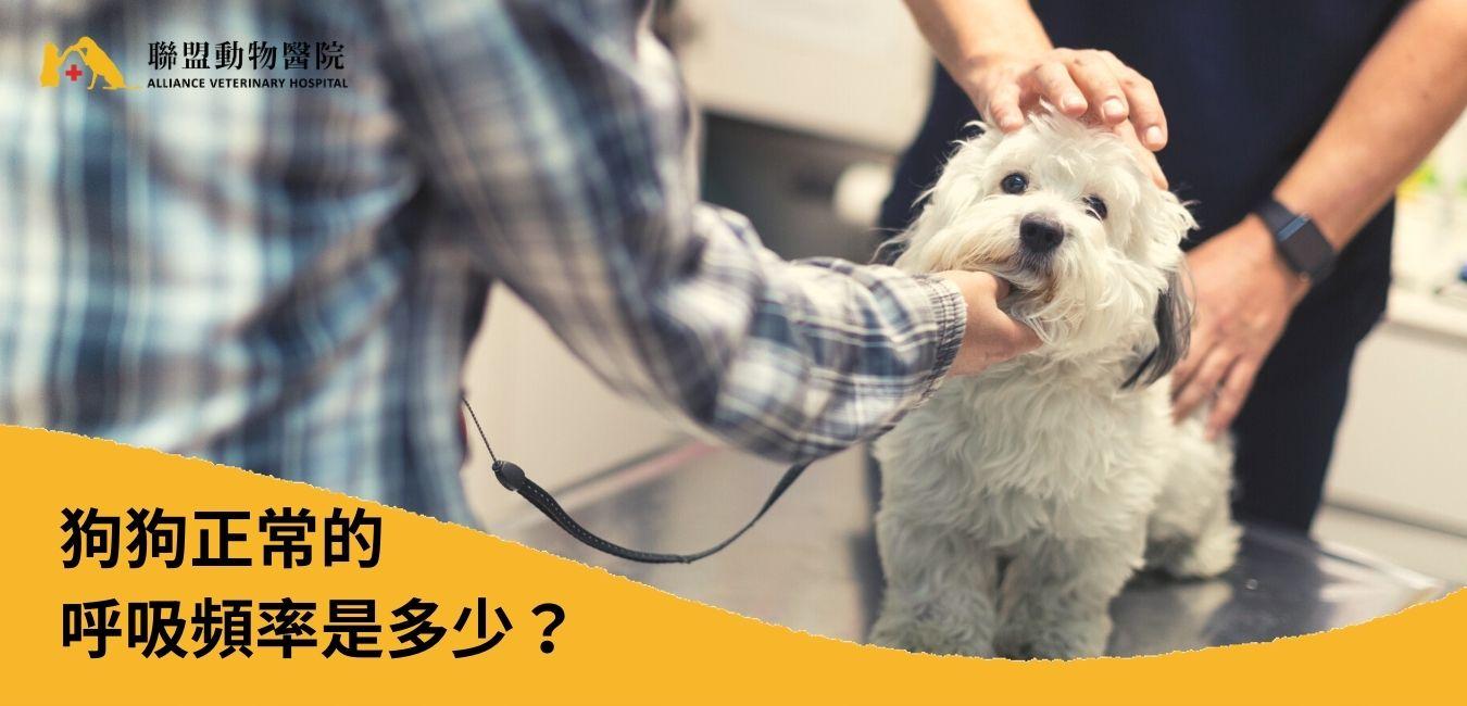 狗狗呼吸急促