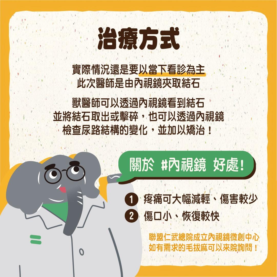 貓尿結石治療方式