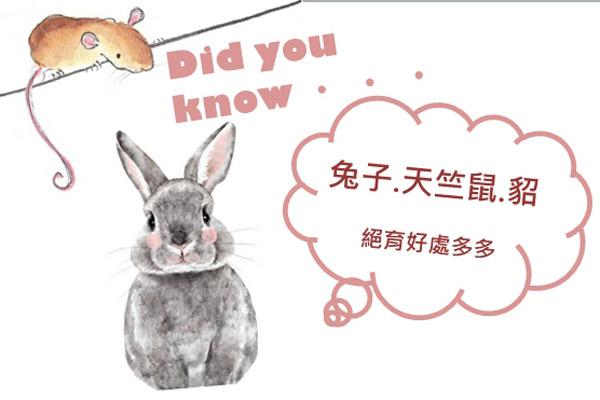 兔子、天竺鼠、貂絕育好處多多
